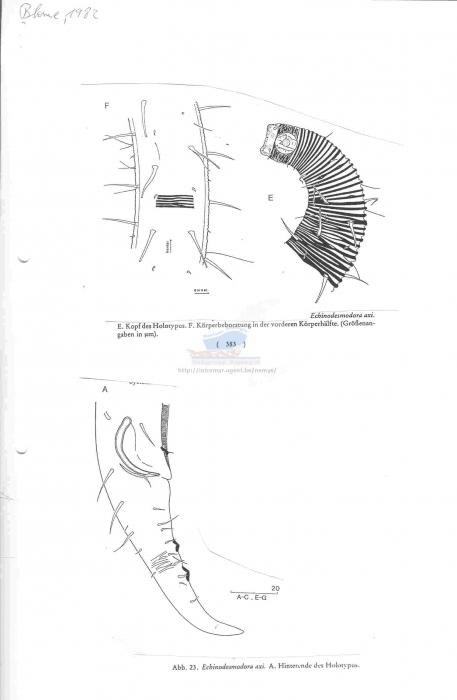 Echinodesmodora axi