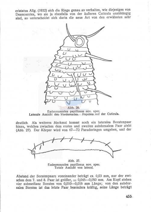 Eudesmoscolex papillosus
