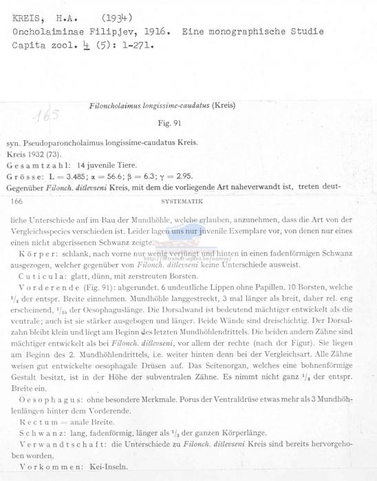 Filoncholaimus longissimecaudatus