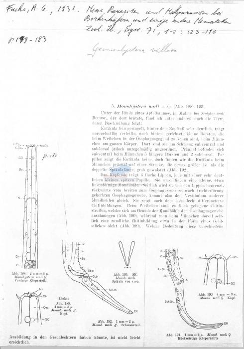 Geomonhystera villosa