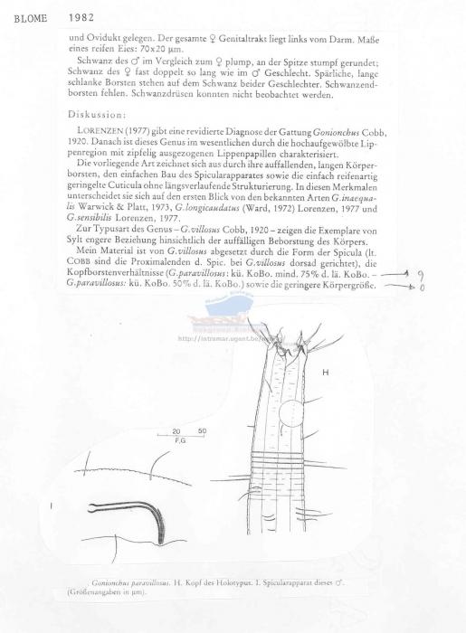 Gonionchus paravillosus