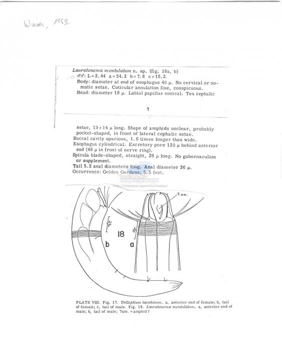 Lauratonema mentulatum