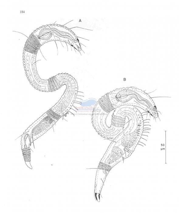 Leptepsilonema richardi