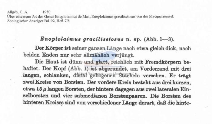 Enoplolaimus gracilisetosus