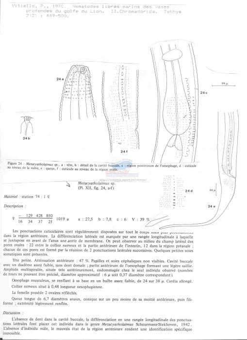 Metacyatholaimus