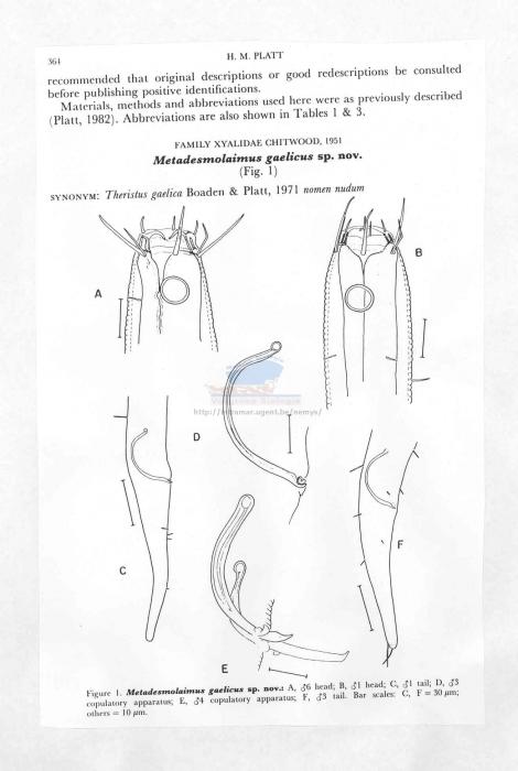 Metadesmolaimus gaelicus