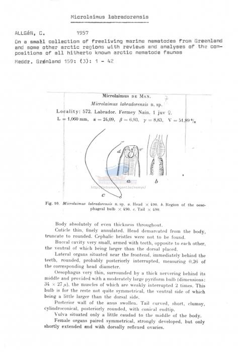 Microlaimus labradorensis