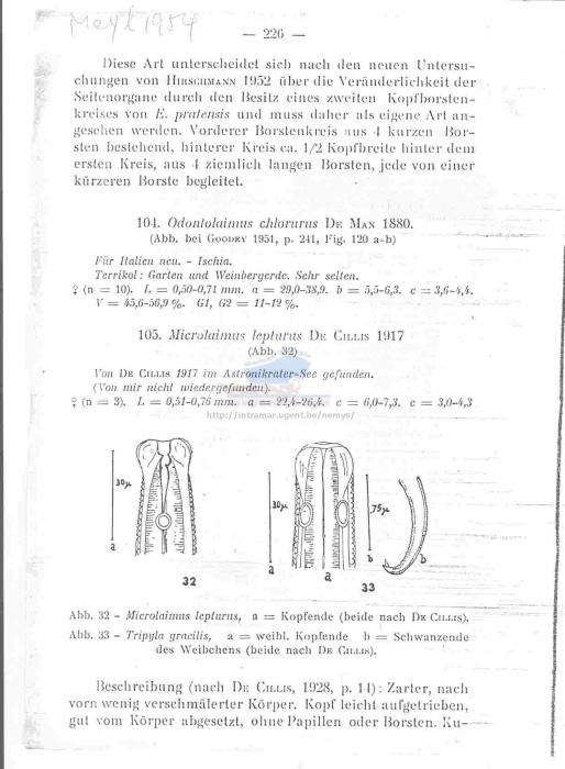 Microlaimus lepturus