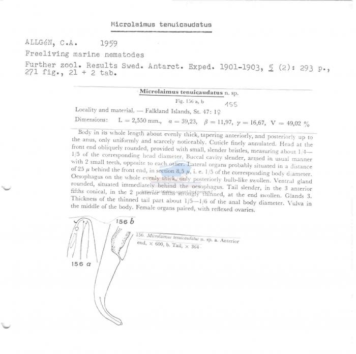 Microlaimus tenuicaudatus