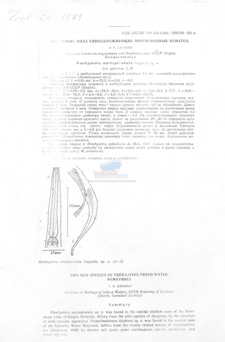 Monhystera uncispiculata