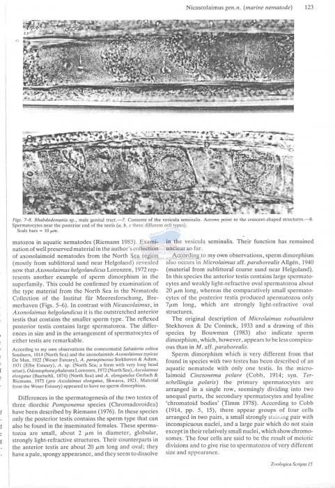 Nicascolaimus punctatus