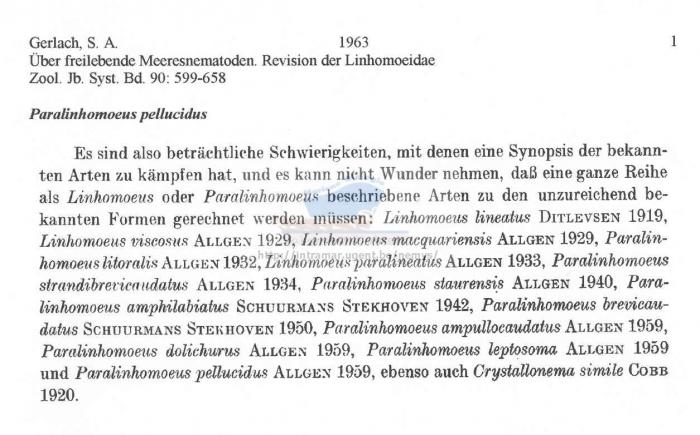 Paralinhomoeus pellucidus