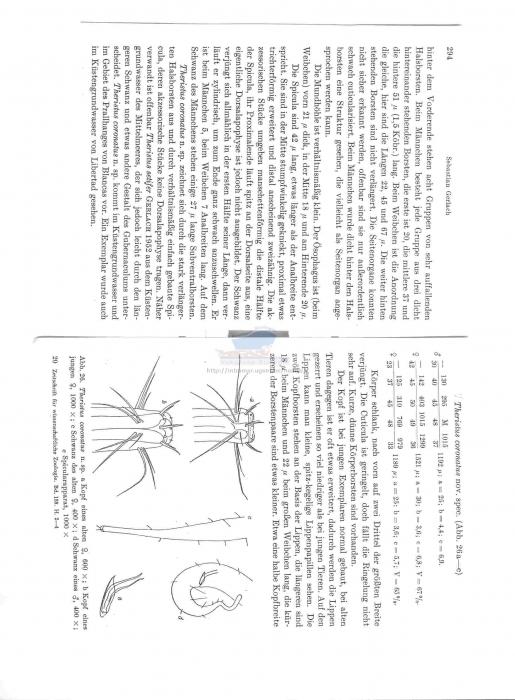 Pseudosteinieria coronatus
