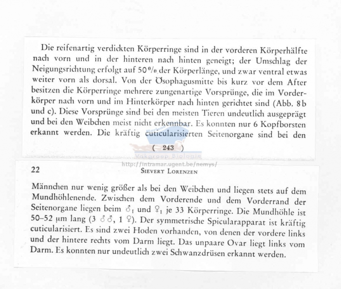 Rhynchonema ornatum