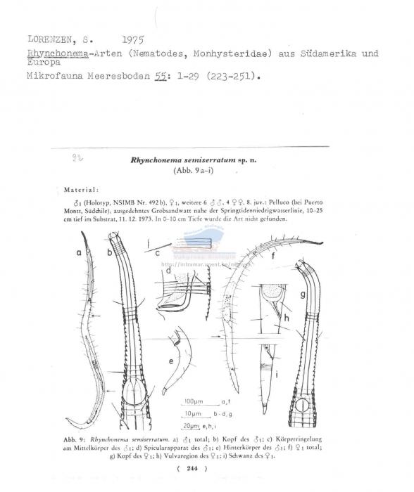 Rhynchonema semiserratum