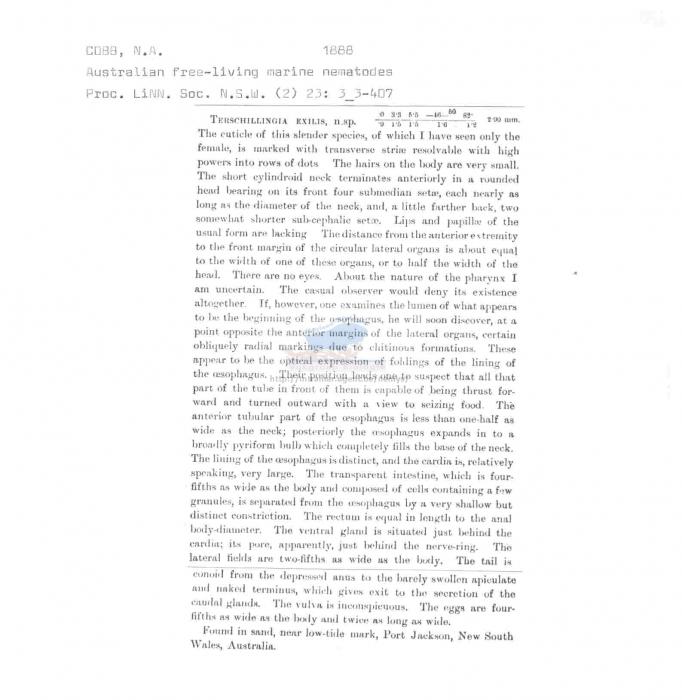 Terschellingia exilis