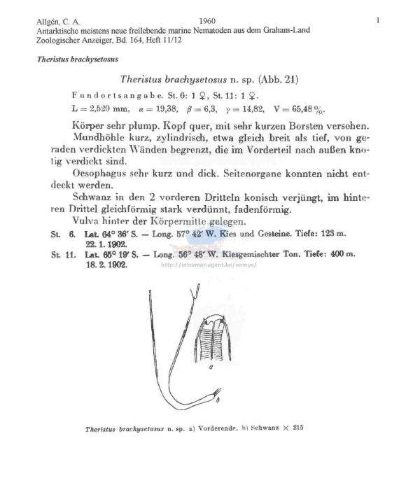 Theristus brachysetosus