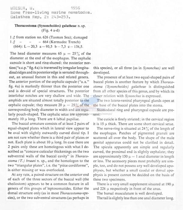 Thoracostoma galatheae