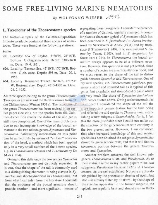 Thoracostoma