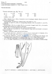 Viscosia microseta
